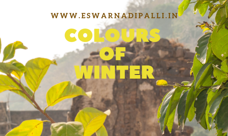 colours of winter