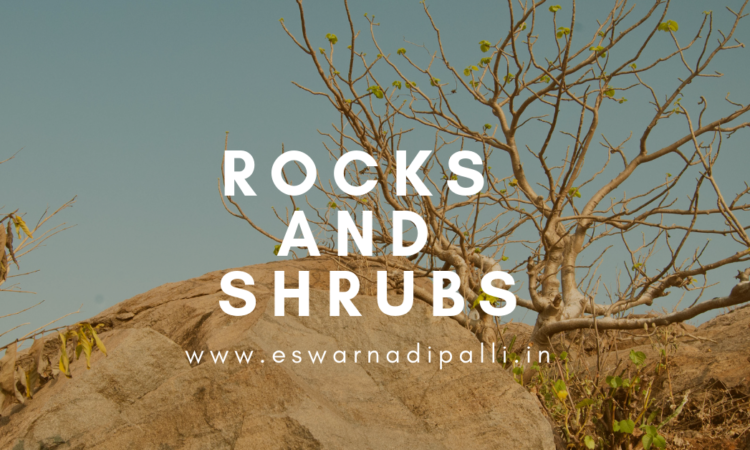 ROCKS AND SHRUBS